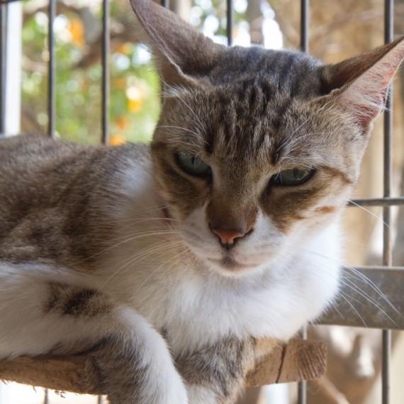 האופנה האופנתית ראשון אוהבת חיות   חתולים לאימוץ HR-62