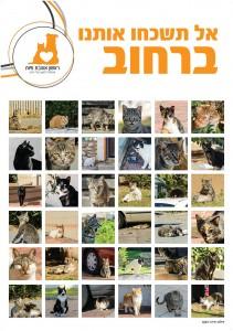 פוסטר-חתולי-רחוב-לדפוס-2
