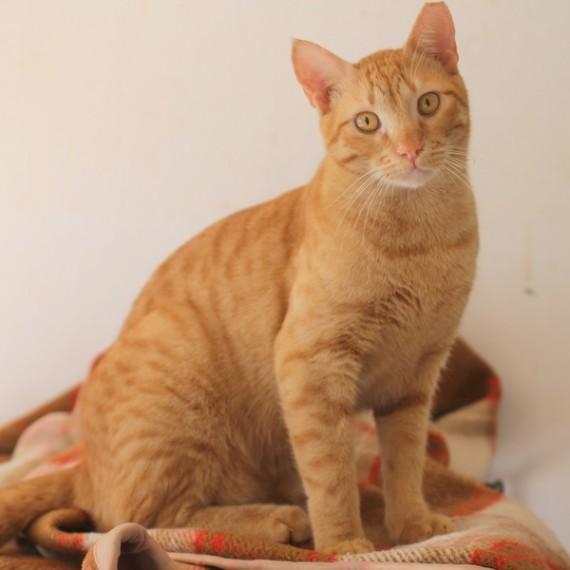 פנטסטי ראשון אוהבת חיות   חתולים לאימוץ WQ-09