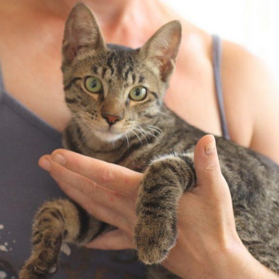 עדכון מעודכן ראשון אוהבת חיות   חתולים לאימוץ FH-49