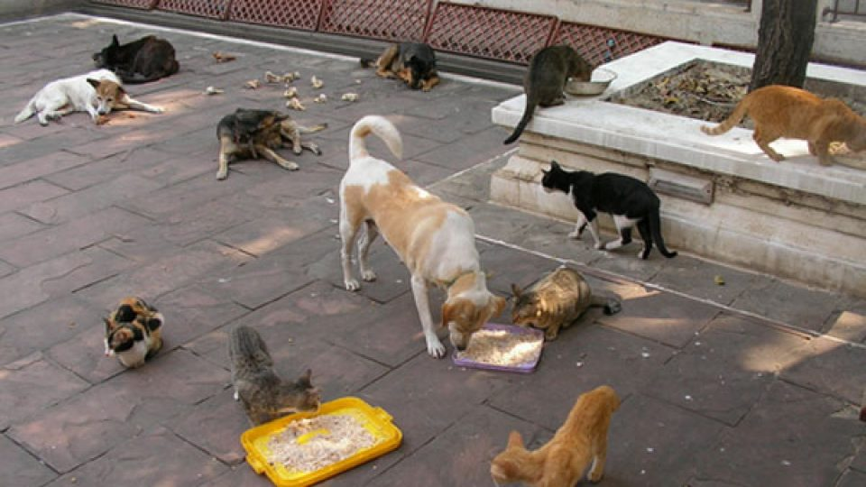האכלת חתולים