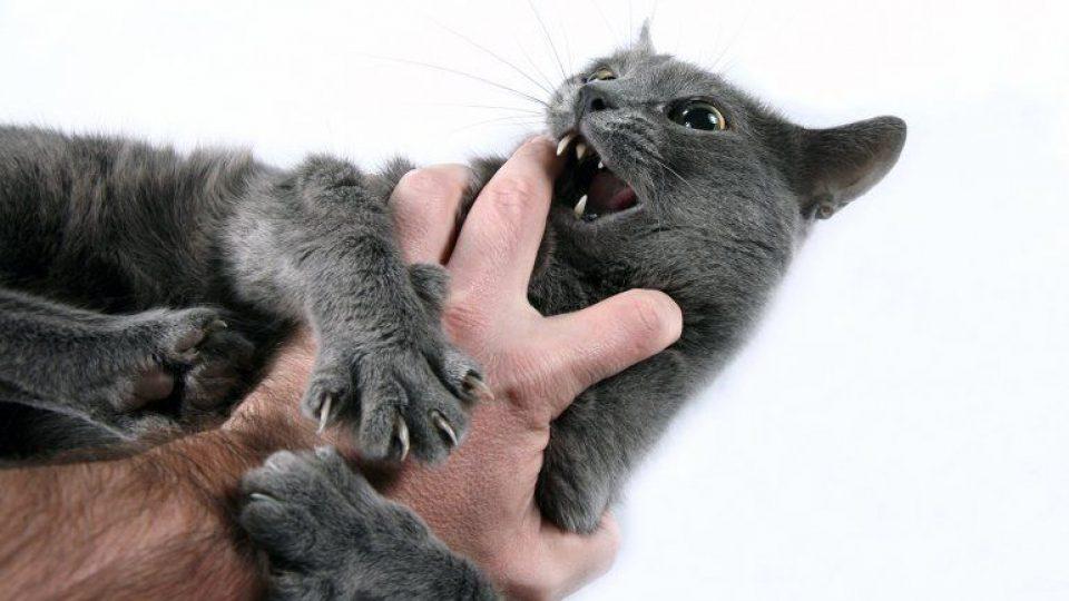 חתול תוקף יד