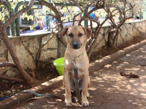 עדכון מעודכן ראשון אוהבת חיות   צ'ינצ'ילה GX-98
