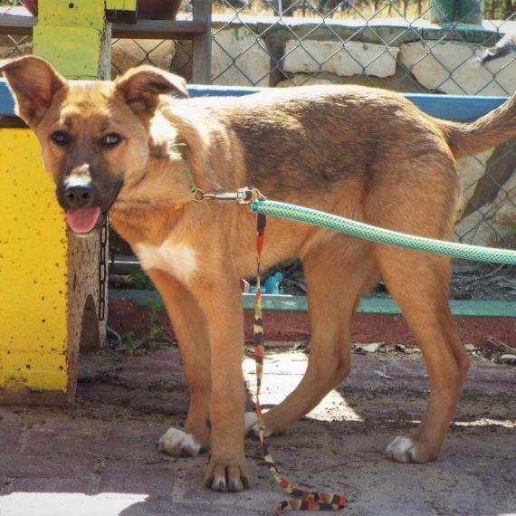 רק החוצה ראשון אוהבת חיות | כלבים לאימוץ LT-44
