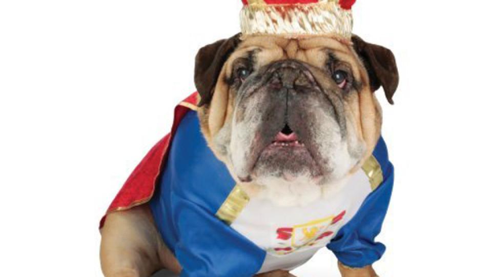 zelda-canine-king-halloween-dog-costume-1