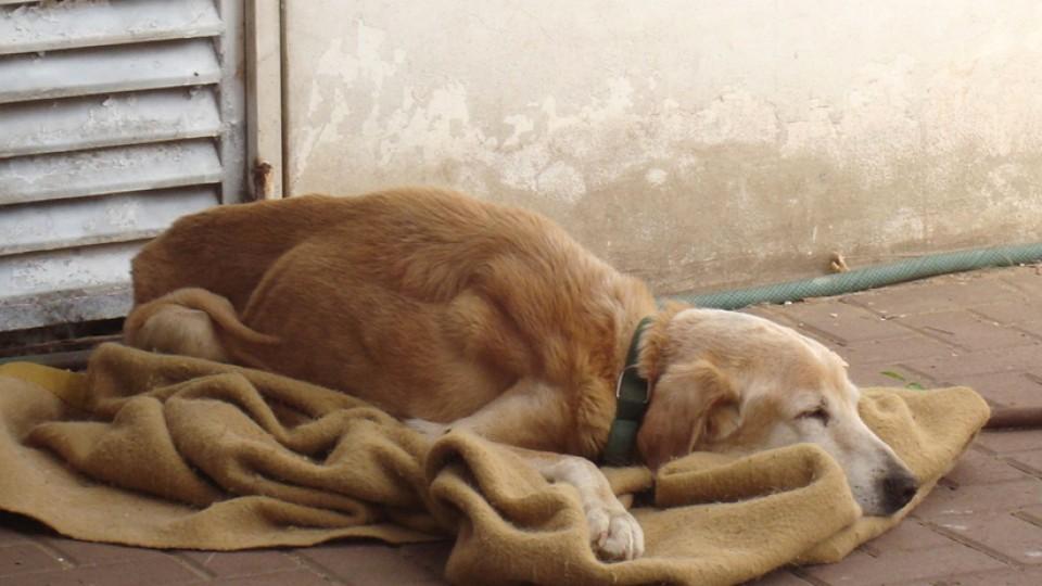 חוק צער בעלי חיים