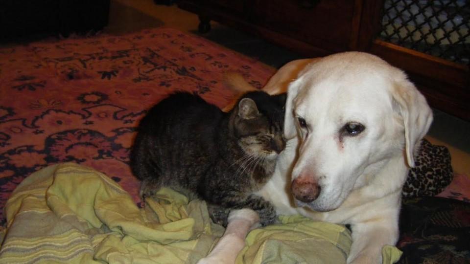 חתול וכלב הבדלים