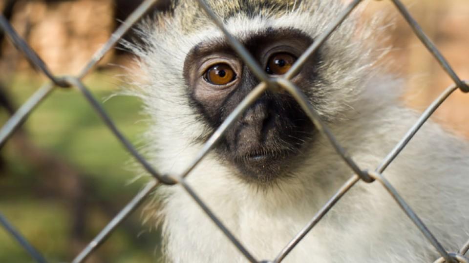 סחר בבעלי חיים