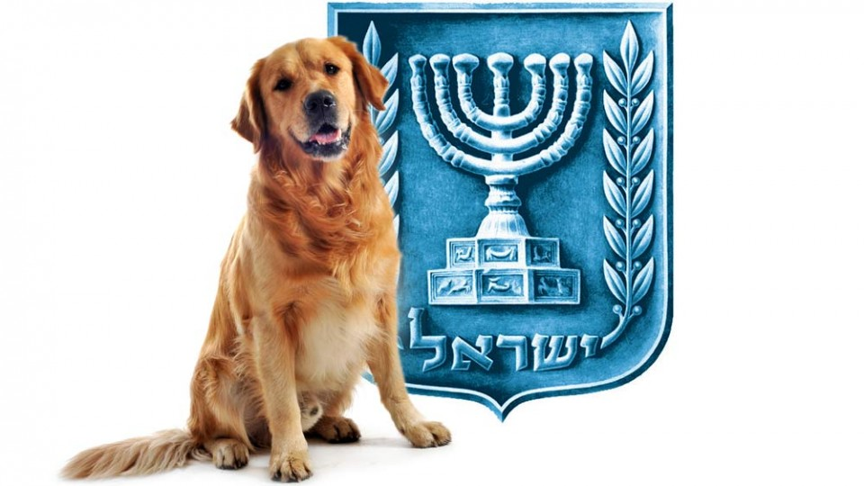 dog-israel