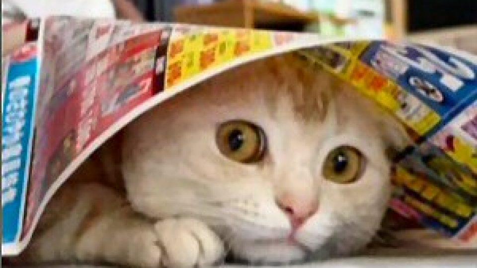 חתול פחדן