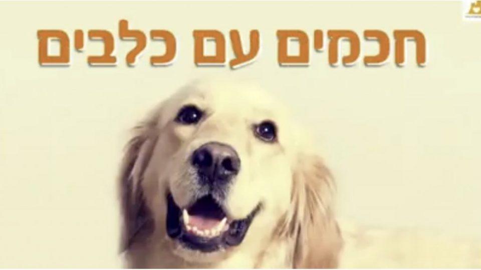 חכמים עם כלבים