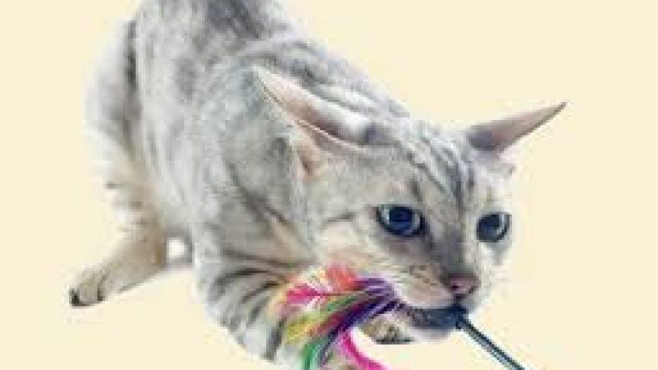 חתול צייד