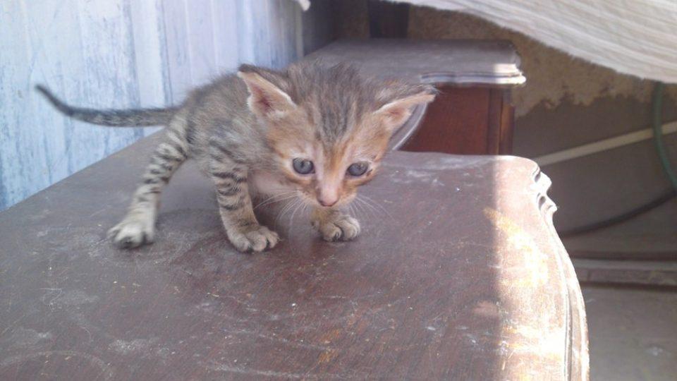 מה עושם כשמוצאים גור חתולים